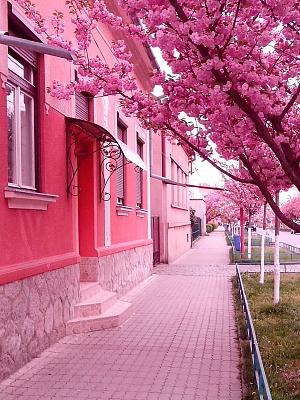 Однокомнатная квартирапосуточно в Мукачево, ул. Маргитича, 35